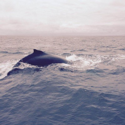 gallery-explore-whales